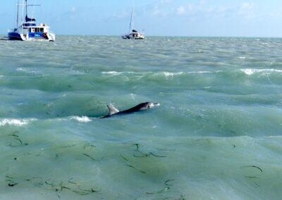 Die berühmten Flaschennasen-Delfine in Monkey Mia