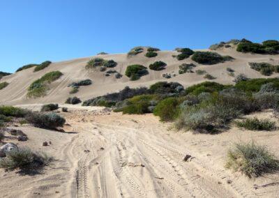 Sanddünen von Lancelin nördlich von Perth