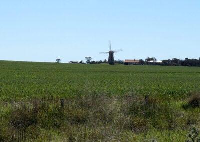 Die Lilie, Stirling Ranges, Westaustralien, niederländische Windmühle