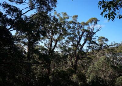Tree Top Walk - Tal der Riesen, Dänemark, Westaustralien